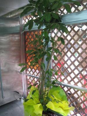 開店用おまかせ観葉植物